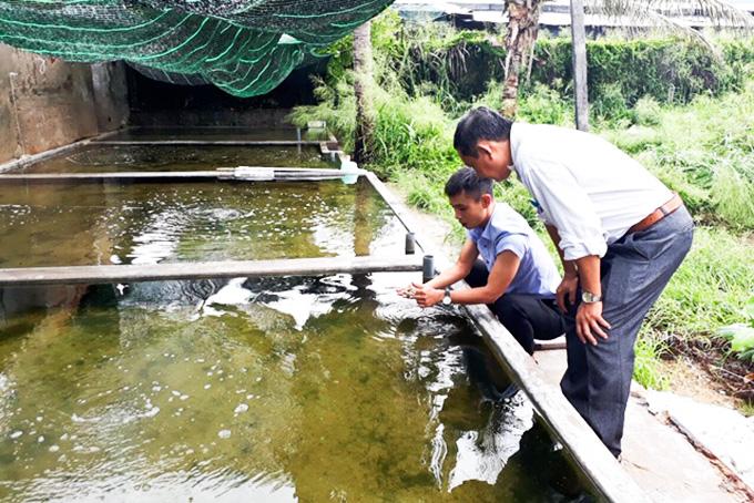 Khánh Hòa: Nuôi thành công con sá sùng trong bể, bắt được 1 tấn - Hình 1