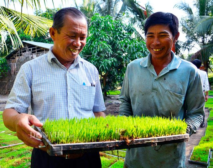 Kiên Giang: Nuôi cá ruộng, trồng dưa leo mùa lũ mà thành triệu phú - Hình 1