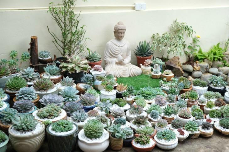 Khu vườn với hàng trăm chậu sen đá của chàng trai chuyển giới ở Sài Gòn - Hình 2