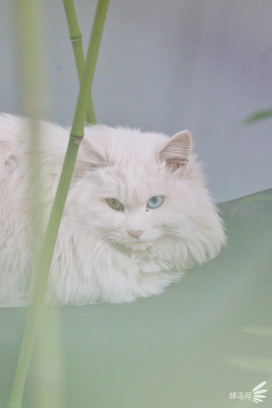 Chết lịm thần thái quý tộc của những con mèo trong Tử Cấm Thành - Chuyện lạ  - Việt Giải Trí