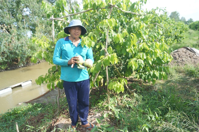 Trai An Giang trồng na Hoàng hậu ra toàn trái khủng, bán đắt hàng - Hình 1