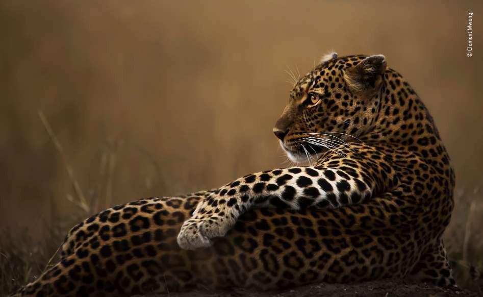 Những khoảnh khắc ấn tượng nhất của các loài động vật hoang dã - Hình 1