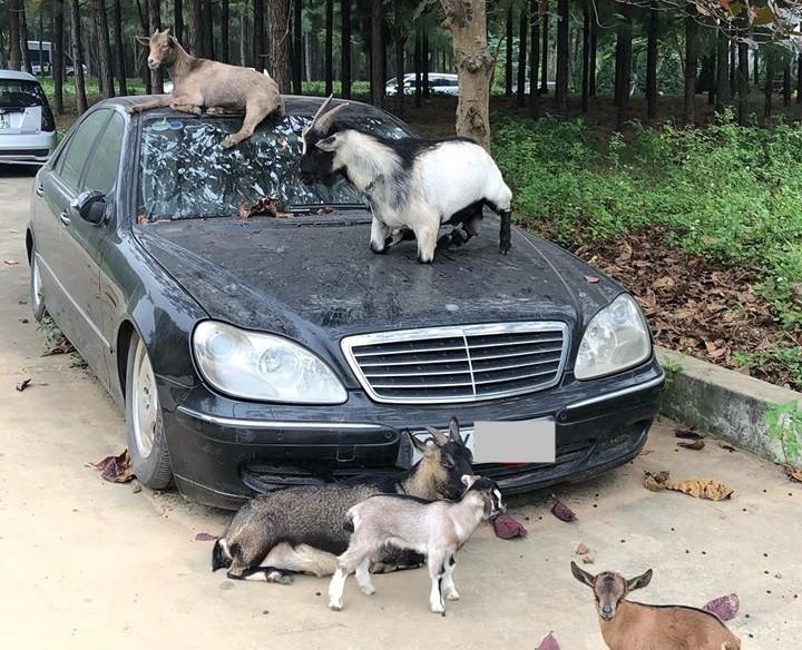 Xót xa nhìn loạt xe Mercedes-Benz đắt đỏ bị vứt xó ở Hà Nội - Hình 1
