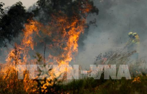 Cháy rừng ở Australia nguy cơ lan rộng - Hình 1