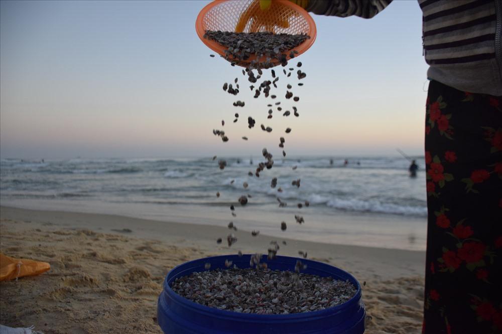 Ngư dân Quảng Ngãi khuấy lòng biển cào những con ốc gạo đủ màu sắc - Hình 4