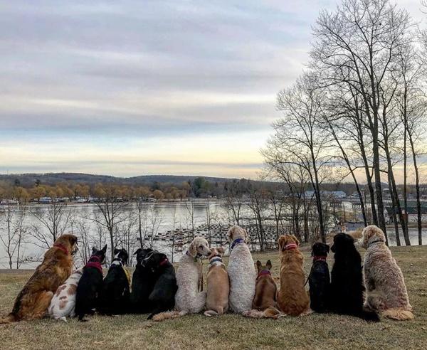 Hội những chú chó mặt xị vì phải dậy quá sớm đi dạo - loạt ảnh khiến ai nhìn cũng cười nghiêng ngả - Hình 12