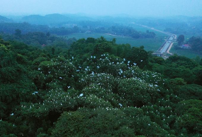 Cụ ông Thanh Hóa quyết bảo vệ bằng được 7.000 con chim - Hình 1