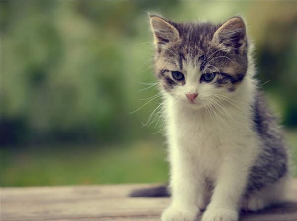 Đau khổ vì bị hàng xóm thịt mất mèo cưng, cô gái được dân mạng bày kế độc, ai nghe xong cũng ám ảnh - Hình 2