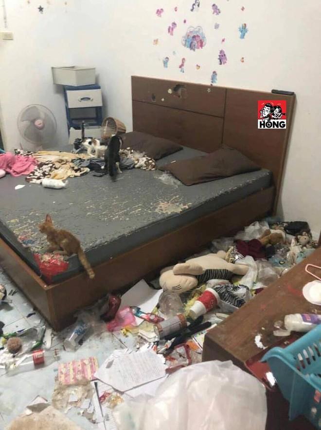 Xôn xao câu chuyện cô gái bùng tiền nhà trọ để lại căn phòng như bãi rác và 3 chú mèo ốm đói gây phẫn nộ - Hình 6