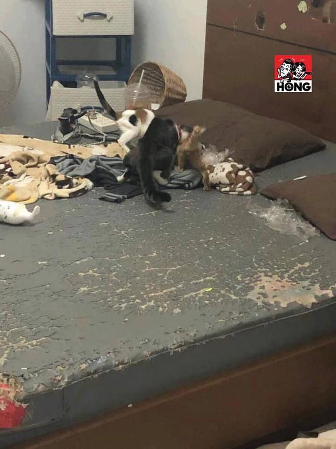 Xôn xao câu chuyện cô gái bùng tiền nhà trọ để lại căn phòng như bãi rác và 3 chú mèo ốm đói gây phẫn nộ - Hình 5
