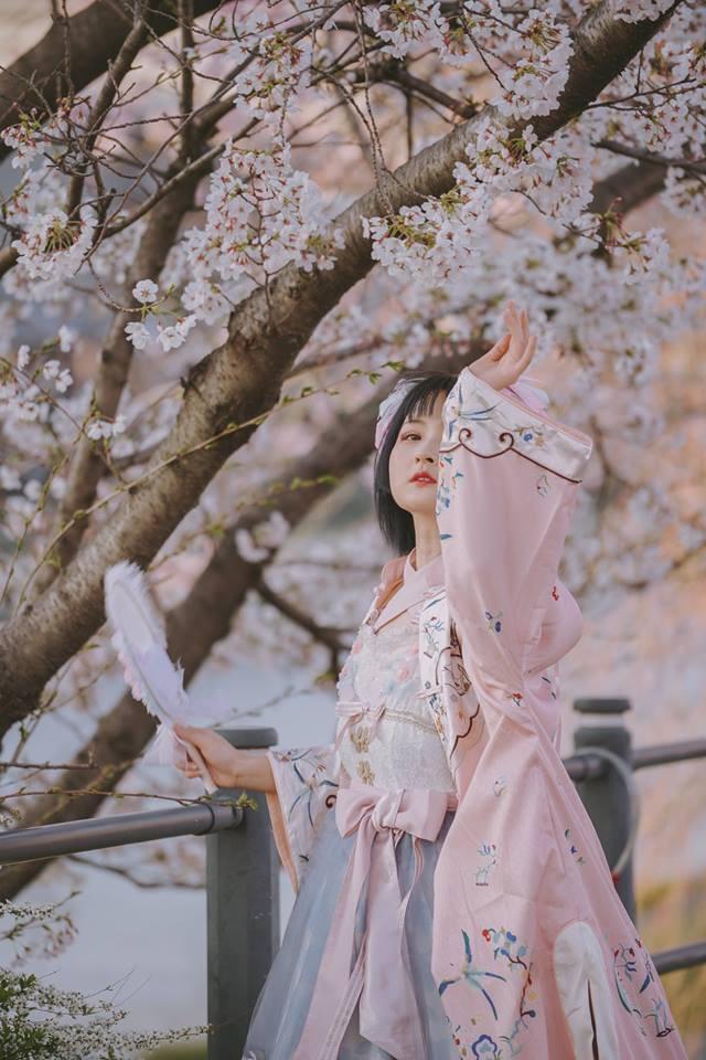 """Cánh rừng với 50 000 cây hoa anh đào ở Nhật Bản, """"nhuộm hồng"""