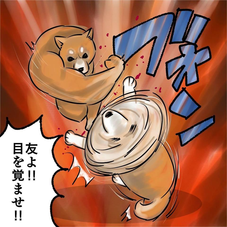 Khoảnh khắc chú chó Shiba quay đầu tung nắm đấm không trượt phát nào như Saitama bất ngờ gây sốt trên MXH - Hình 3