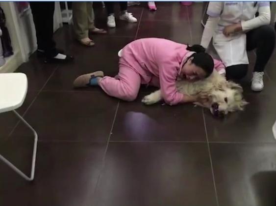 Vừa đưa chó cưng từ Mỹ về đã bị hàng xóm đánh bả, cô gái ôm nó khóc lóc thảm thiết - Hình 2
