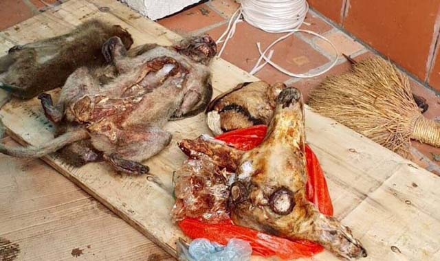 Thu giữ hàng trăm kg động vật và xương động vật quý hiếm - Hình 3