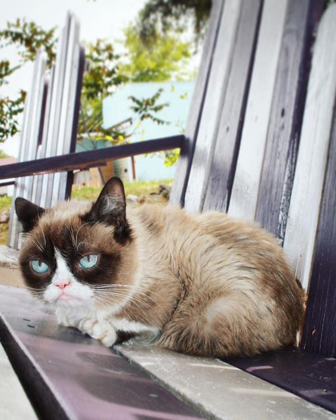 Grumpy Cat - cô mèo cáu kỉnh nhất thế giới với hơn 8 triệu người theo dõi đã qua đời - Hình 11