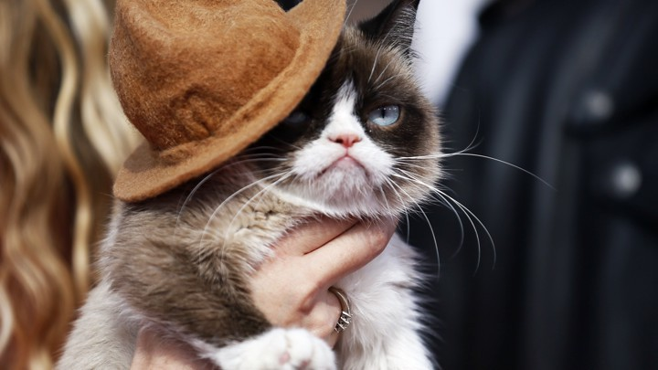 Grumpy Cat - cô mèo cáu kỉnh nhất thế giới với hơn 8 triệu người theo dõi đã qua đời - Hình 5