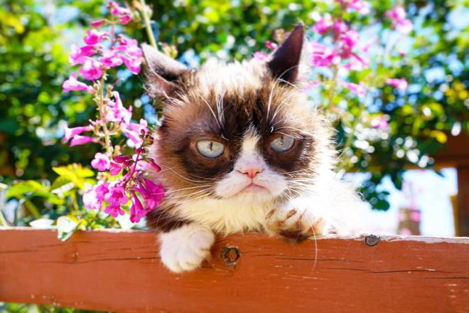 Grumpy Cat - cô mèo cáu kỉnh nhất thế giới với hơn 8 triệu người theo dõi đã qua đời - Hình 10