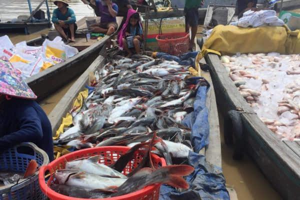 Công an Đồng Nai điều tra vụ cá chết trắng sông La Ngà - Hình 1