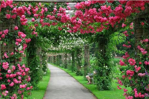 10 loại hoa leo rủ xua tan oi bức mùa hè - Hình 3