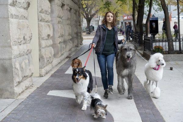 A Dogs Journey: Hành trình mới của Bailey lấy đi vô vàn nước mắt từ khán giải - Hình 7