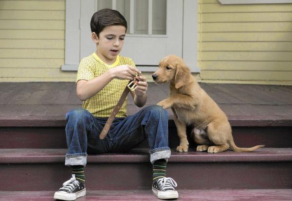 A Dogs Journey: Hành trình mới của Bailey lấy đi vô vàn nước mắt từ khán giải - Hình 4