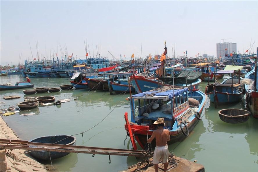 Hàng loạt nằm bờ sau quy định hạn ngạch tàu trên dưới 15m - Hình 1