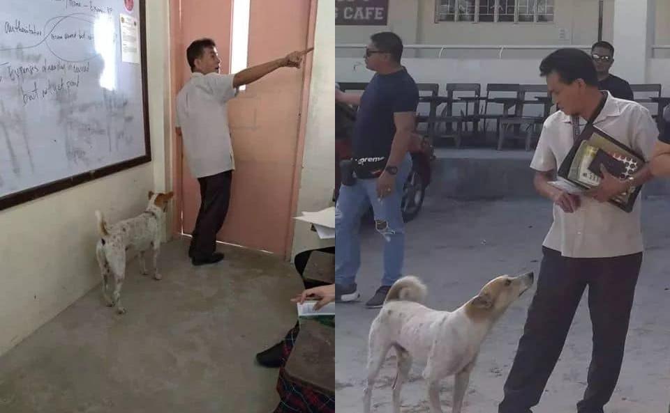 Nằm cạnh linh cữu của thầy giáo suốt nhiều ngày, chú chó khiến cả nhà tang lễ phải rơi nước mắt - Hình 2