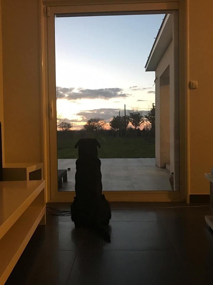 Nằm cạnh linh cữu của thầy giáo suốt nhiều ngày, chú chó khiến cả nhà tang lễ phải rơi nước mắt - Hình 7