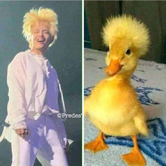 Khi idol Kpop tóc gió thôi bay: Người đẹp lồng lộn, kẻ thành trò cười thiên hạ, riêng em út BLACKPINK gây tò mò - Hình 2
