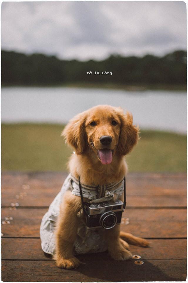 Ngắm bộ ảnh trai đẹp du lịch cùng cún cưng này mới thấy: Đi Đà Lạt với người yêu hay bạn thân là xưa rồi! - Hình 8