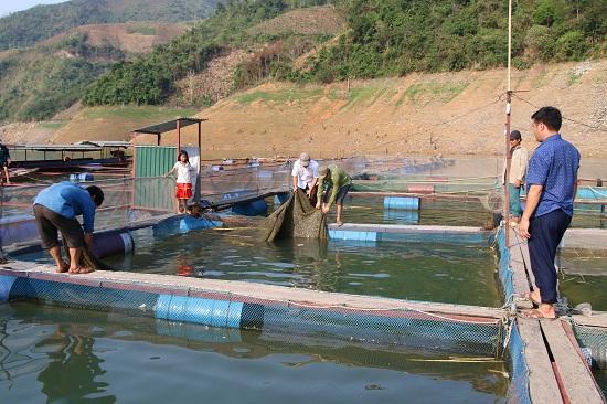 Từ núi xuống sông Đà nuôi cá đặc sản mà khấm khá hẳn lên - Hình 1