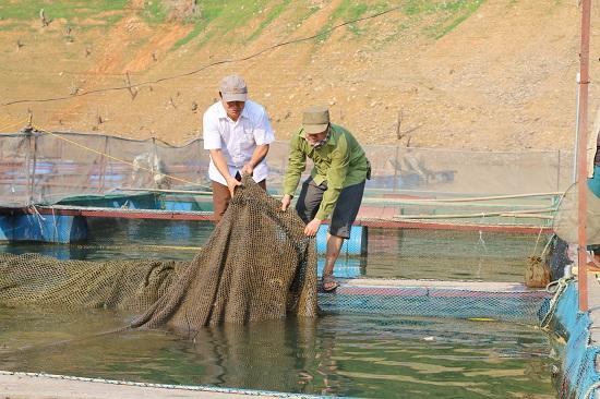 Từ núi xuống sông Đà nuôi cá đặc sản mà khấm khá hẳn lên - Hình 4
