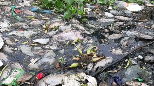 Đà Nẵng: Cá chết trắng, gây ô nhiễm nặng - Hình 1