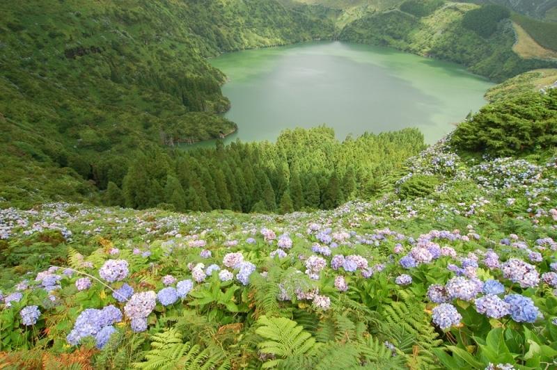 Cánh đồng hoa cẩm tú cầu khoe sắc tuyệt đẹp ở Blue Island - Hình 3