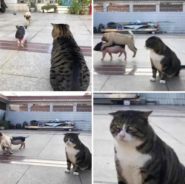 Chú mèo béo cơ nhỡ bỗng thành ngôi sao internet vì biểu cảm quá drama trong mọi khung hình - Hình 8