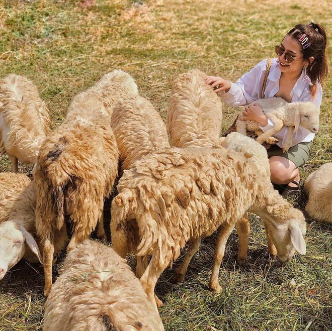 Đến đồng cừu Ninh Thuận để có bộ ảnh trên thảo nguyên độc lạ - Hình 3