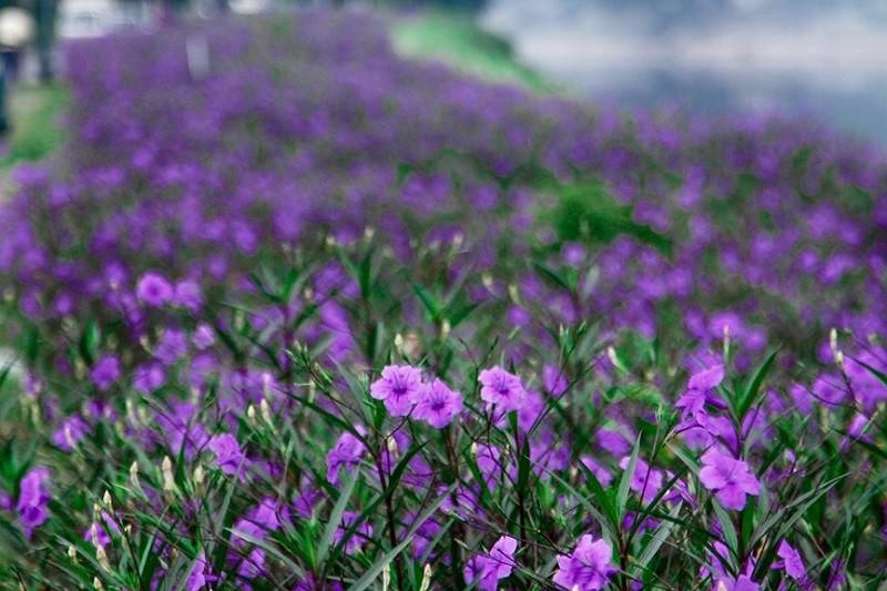 Nhiều người lựa chọn 5 giống hoa này để trồng vì chỉ cần cắm xuống là mọc tốt um - Hình 3