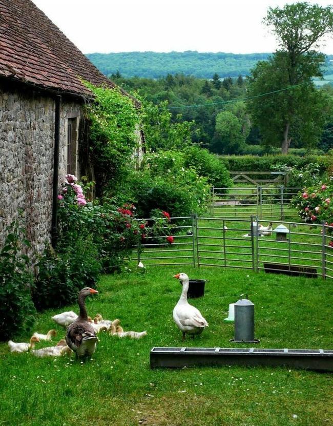 Cuộc sống bình yên, tự tại trong những ngôi nhà ngập tràn nắng gió và hương thơm vạn người mơ ước - Hình 3