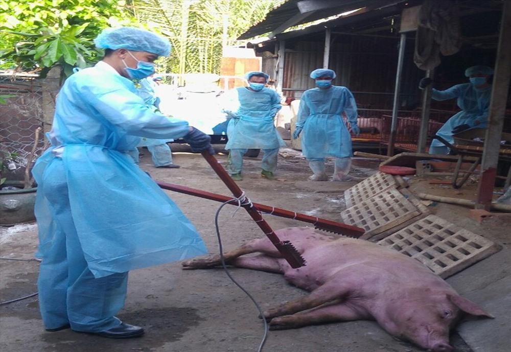 TPHCM: Tẩy trùng 3km quanh khu vực dịch tả lợn Châu Phi - Hình 2