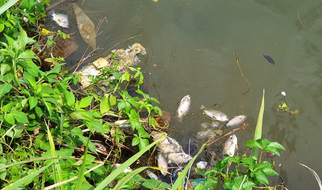 Cá chết bất thường nổi đầy hồ Bảo Lộc, mỗi ngày vớt 40 - 50 kg - Hình 2