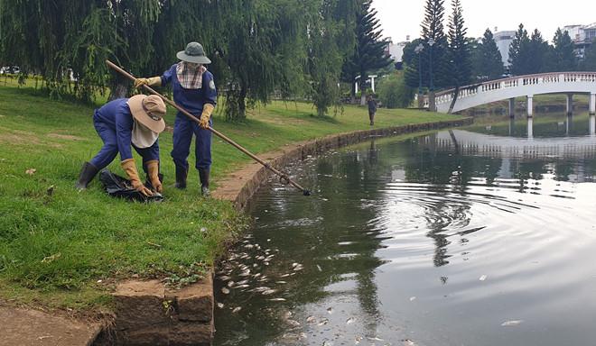 Cá chết bất thường nổi đầy hồ Bảo Lộc, mỗi ngày vớt 40 - 50 kg - Hình 3