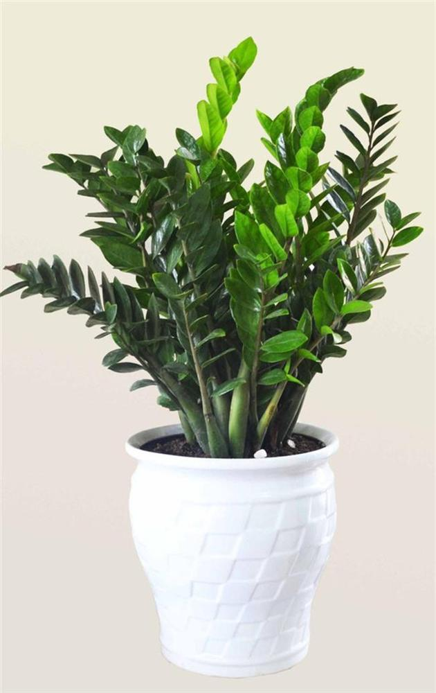 12 con giáp cứ trồng cây phong thủy này để hút vận may, gia tăng lộc khí, gọi lộc về nhà - Hình 1