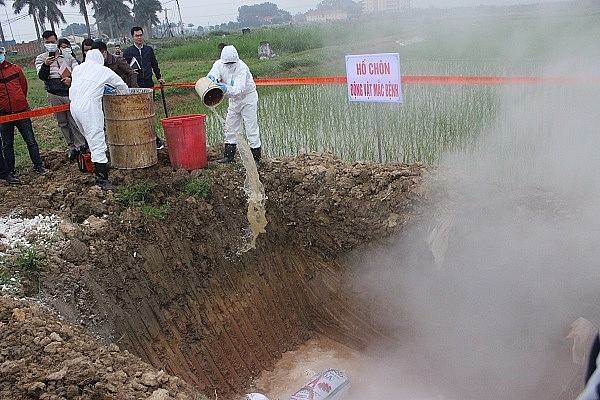 Hà Nội tiêu hủy 363.812 con lợn mắc bệnh dịch tả lợn châu Phi - Hình 1