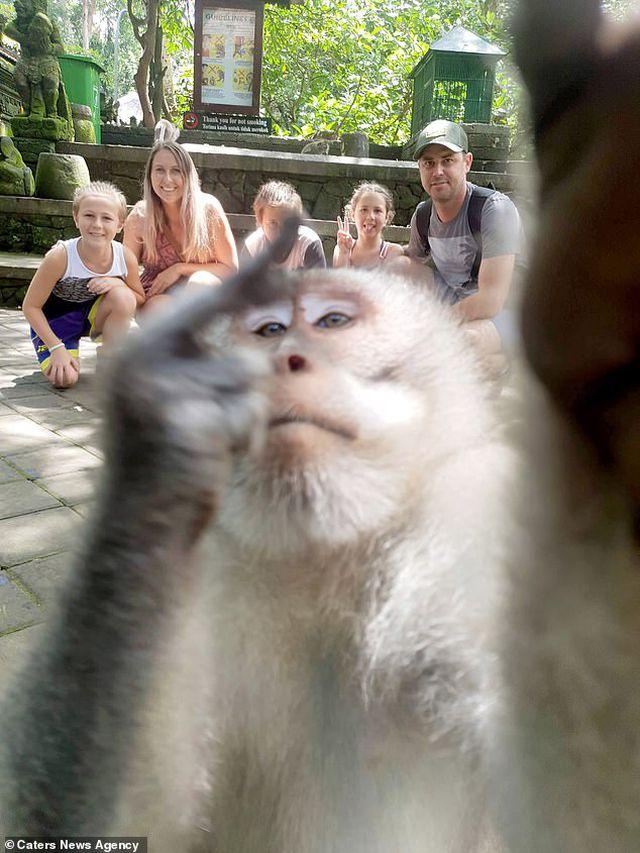 Đi nghỉ mát, gia đình được khỉ chụp tự sướng ấn tượng như người - Hình 1
