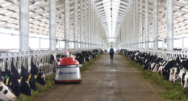 Vùng nguyên liệu sữa giúp Vinamilk dẫn đầu thị trường sữa tươi - Hình 4