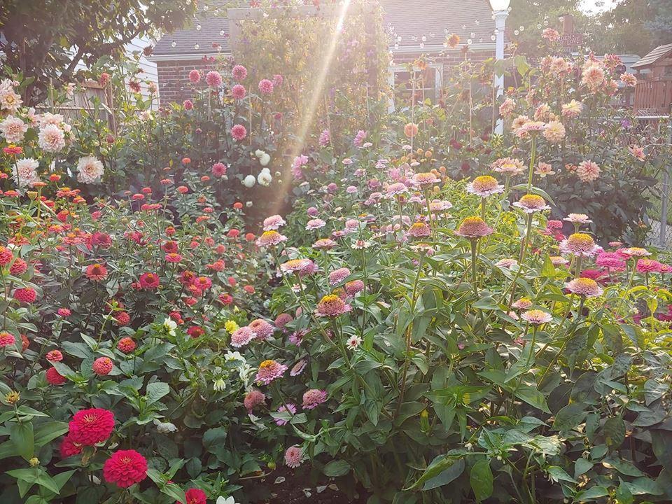 Khu vườn quá đỗi thơ mộng với hoa và rau quả của người mẹ đơn thân cùng cô con gái nhỏ xinh đẹp - Hình 30