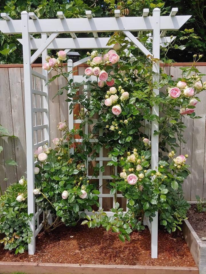 Khu vườn quá đỗi thơ mộng với hoa và rau quả của người mẹ đơn thân cùng cô con gái nhỏ xinh đẹp - Hình 8