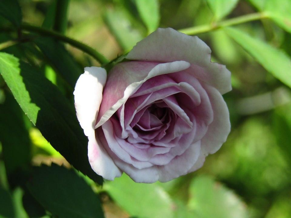 Vườn hồng níu giữ bước chân người ngắm nhờ vẻ đẹp lãng mạn như một bài thơ ở Hà Nam - Hình 23