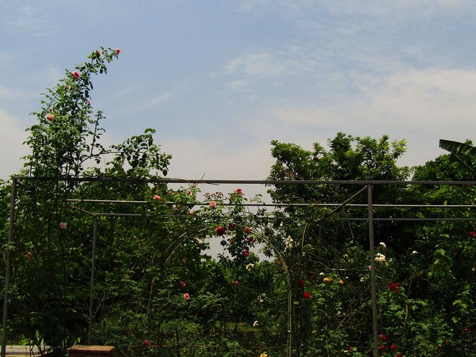 Vườn hồng níu giữ bước chân người ngắm nhờ vẻ đẹp lãng mạn như một bài thơ ở Hà Nam - Hình 10