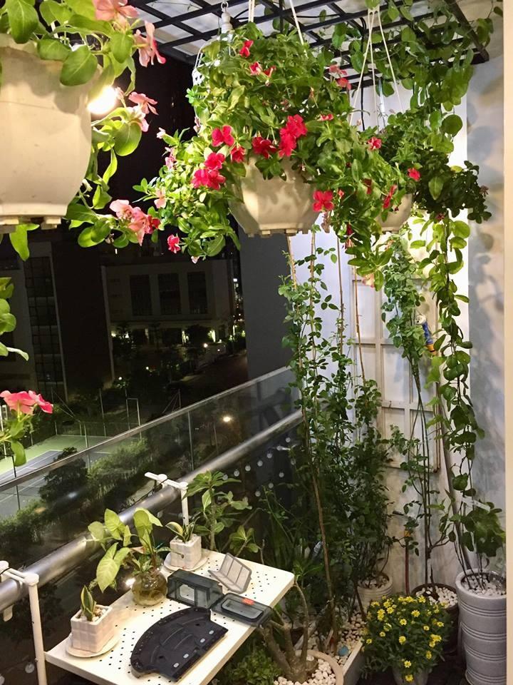 Ban công xanh mát trên tầng cao bất chấp nắng gió nhờ trồng rau và hoa ở TP HCM - Hình 8